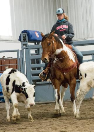 Rider on her hourse works cattle in the CWC equine center