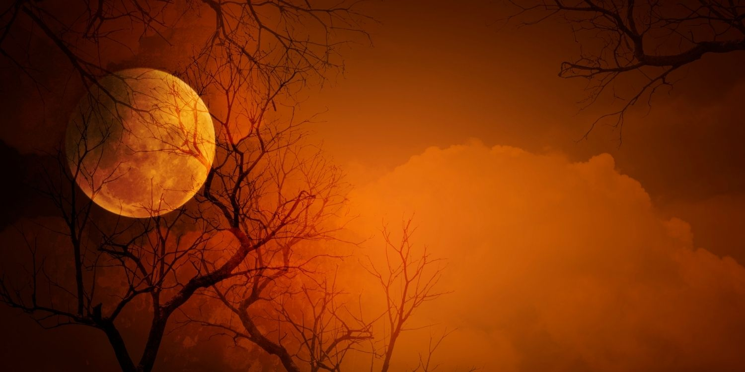 photos of a full moon with dead branches. The photo is an orange color with black branches.